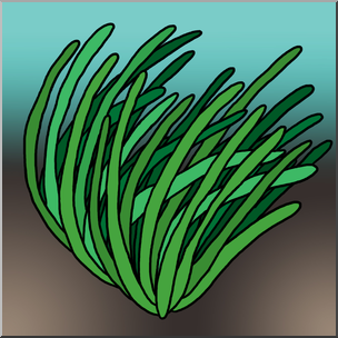 Clip Art: Plants: Seagrass Color 1 I abcteach.com.