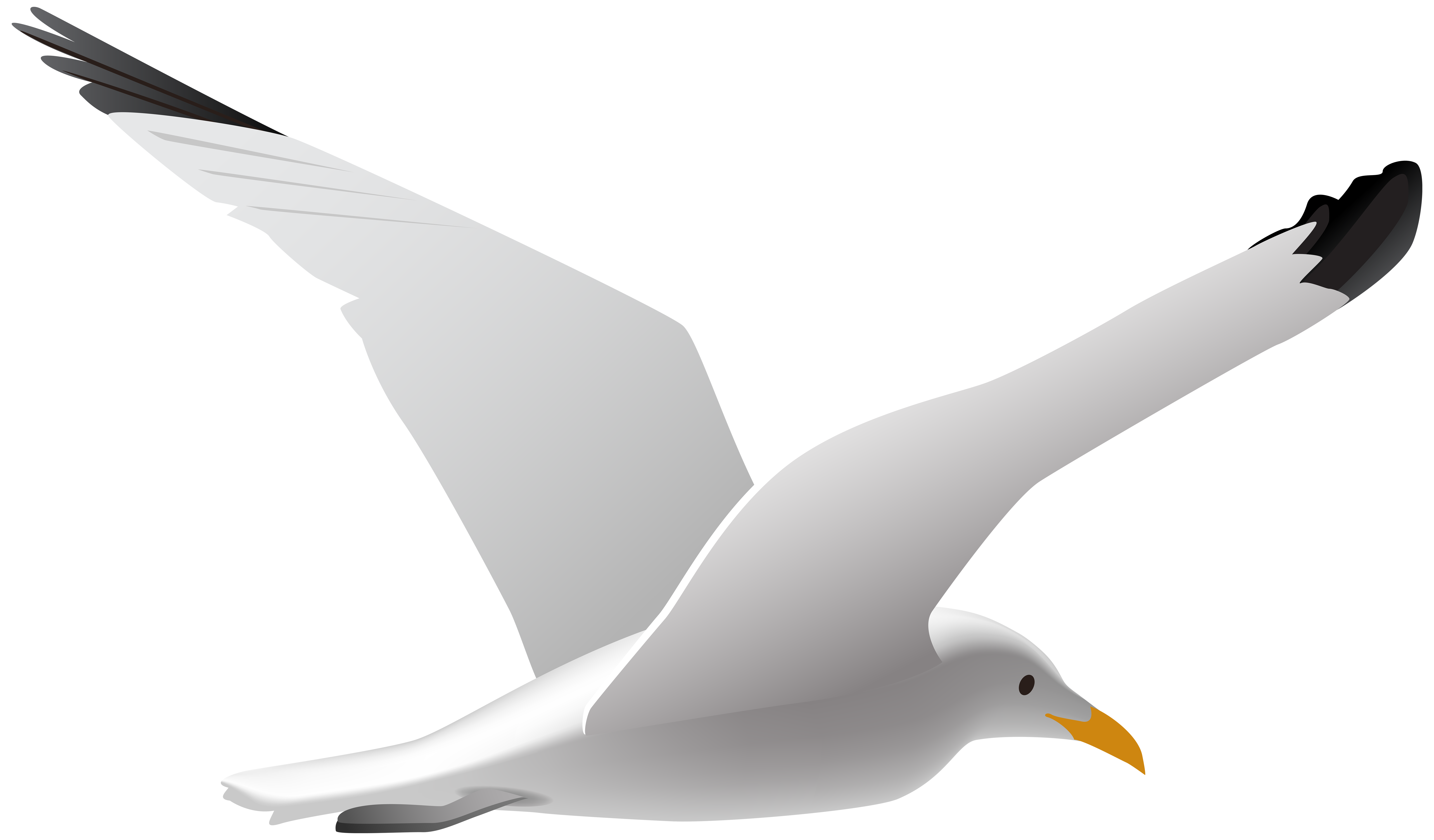 Seagull PNG Clip Art Image.