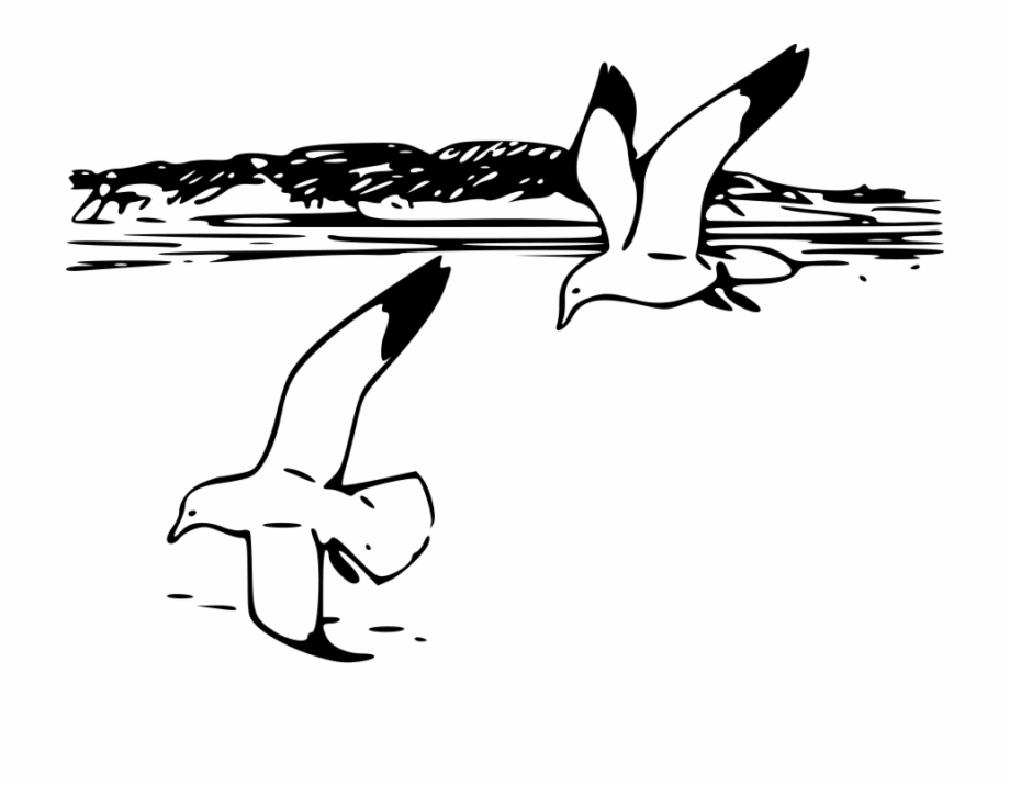 Clip Art Black And White Seagull.