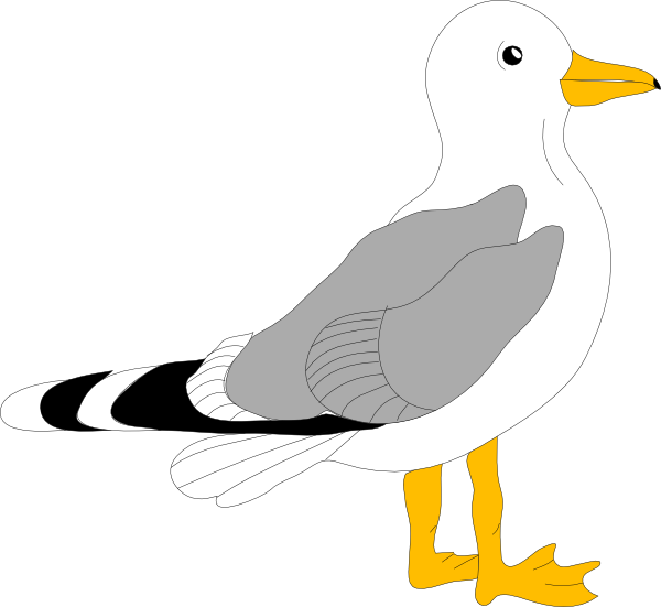 Seagull Clipart Png.