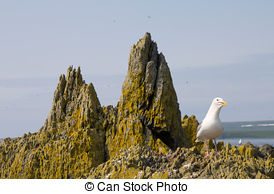 Stock Photographs of seagull big white on a branch. colony of.