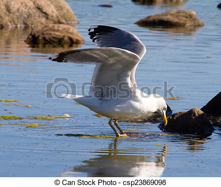 Stock Photographs of seagulls in a colony of birds.