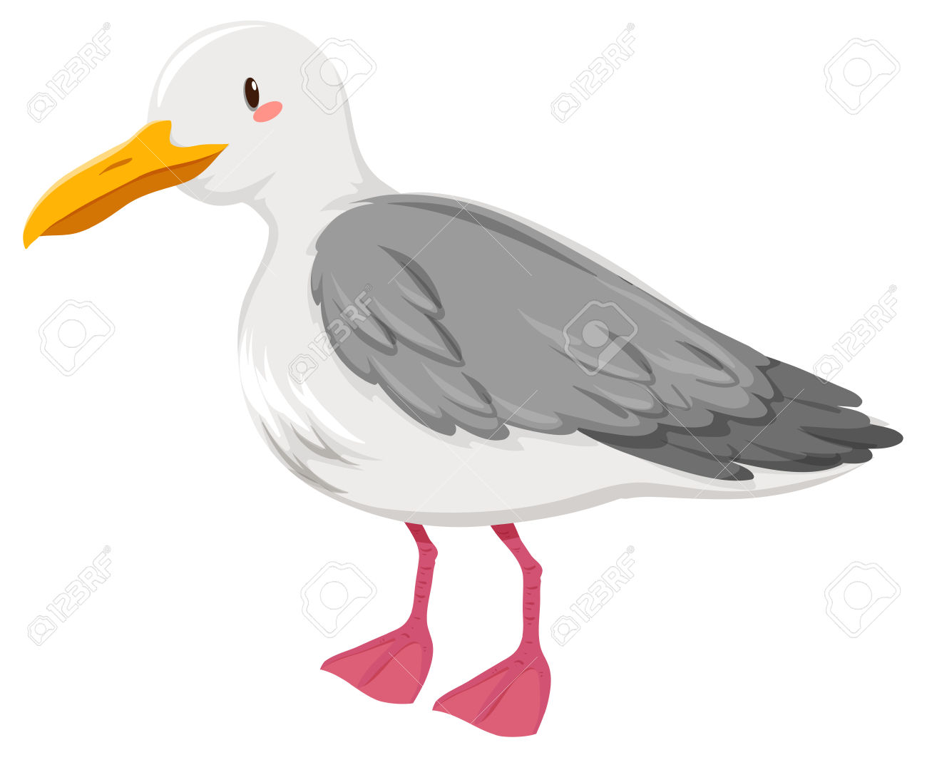 Seagull With Gray And White Feather Illustration Royalty Free.