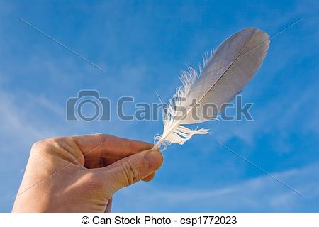 Stock Photos of seagull feather.
