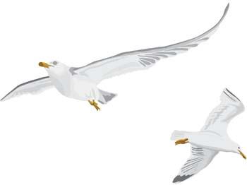 Free Seagull Cliparts, Download Free Clip Art, Free Clip Art.