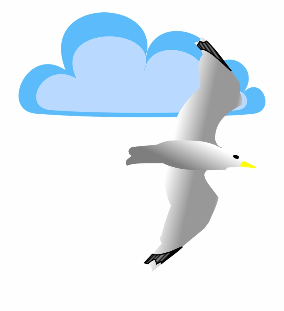 Cloud Seagull Bird Flying Png Image.