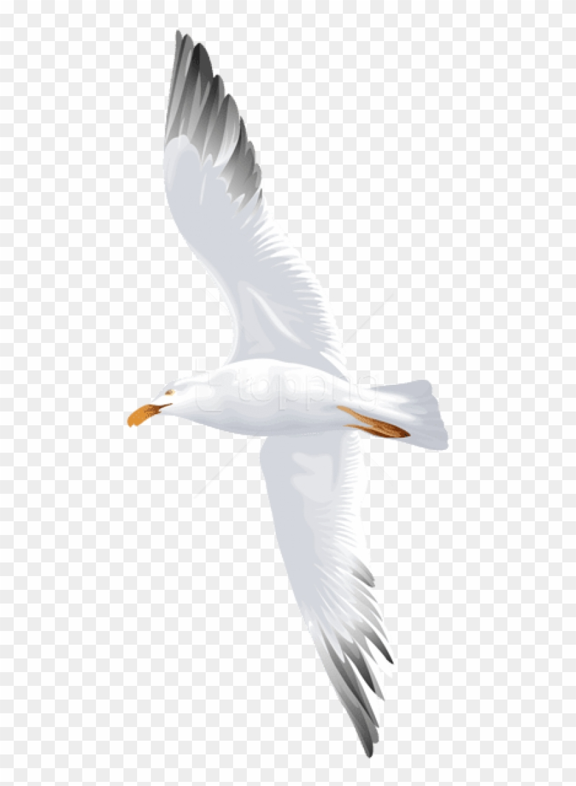 Free Png Download Seagull Flying Png Images Background.
