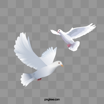 Seagulls Png, Vector, PSD, and Clipart With Transparent.