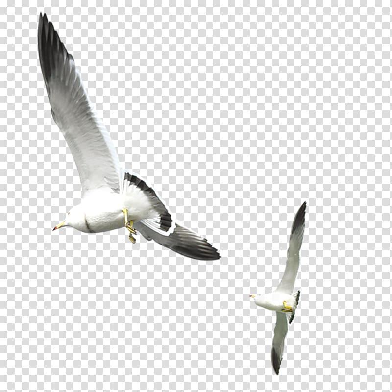 Two white seagulls, Gulls Bird, Flying seagull transparent.