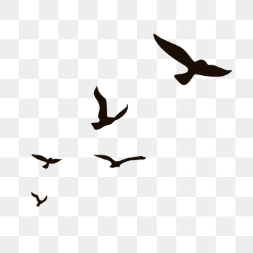 Flying Seagulls PNG Images.
