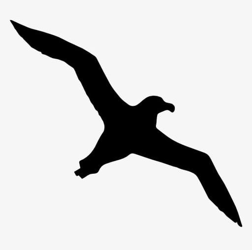 Seagull Silhouette PNG, Clipart, Animal, Bird, Black, Black.