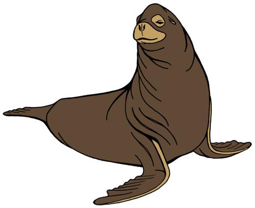 Cartoon Images Sea Lions.