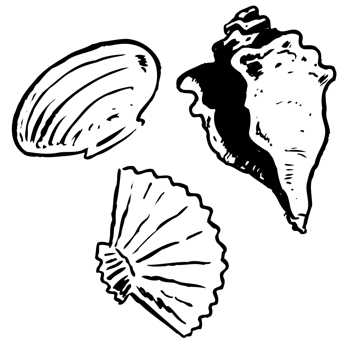 Free Seashells Cliparts, Download Free Clip Art, Free Clip.