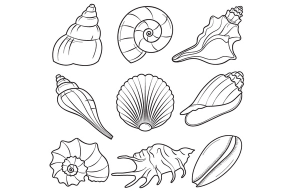 Free Sea Shells Black And White, Download Free Clip Art.