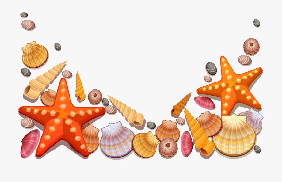 Shell Border Frames Illustrations.