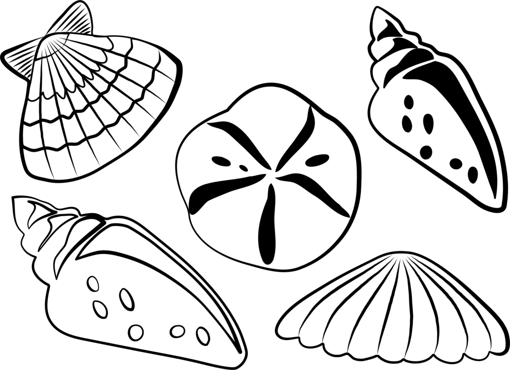 Sea shell clipart black and white 4 » Clipart Portal.