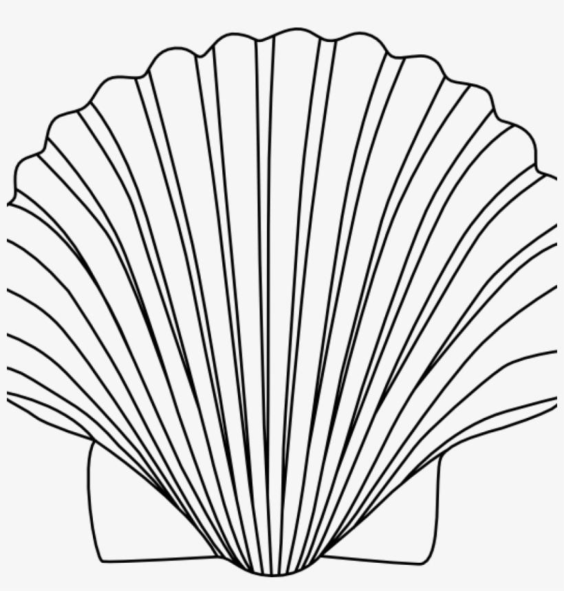 Shell Clipart Shells Clipart Black And White For Free.