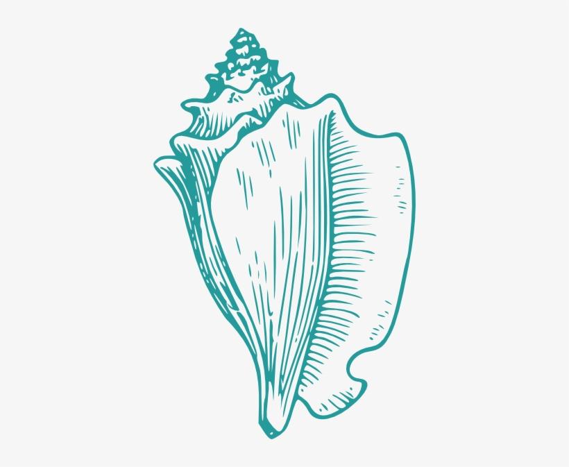 Wedding Shells Cliparts.