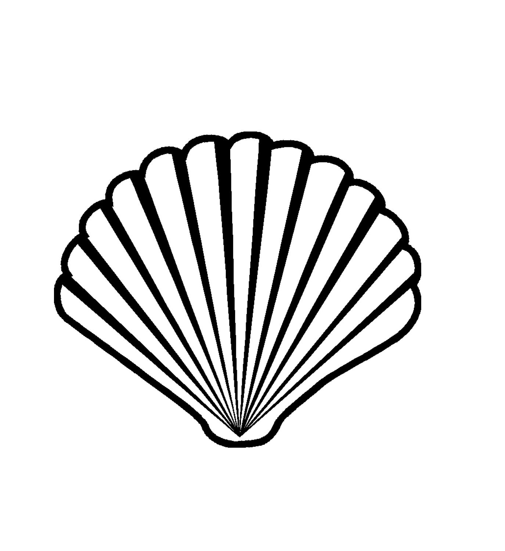 Seashell vector clipart.