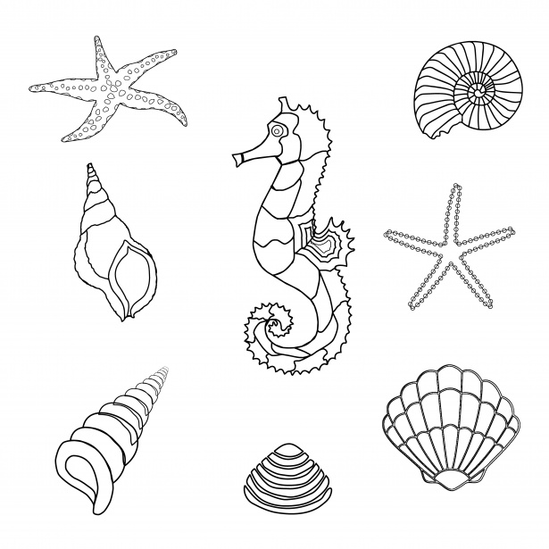 Seahorse, Shells Outline Clipart Free Stock Photo.