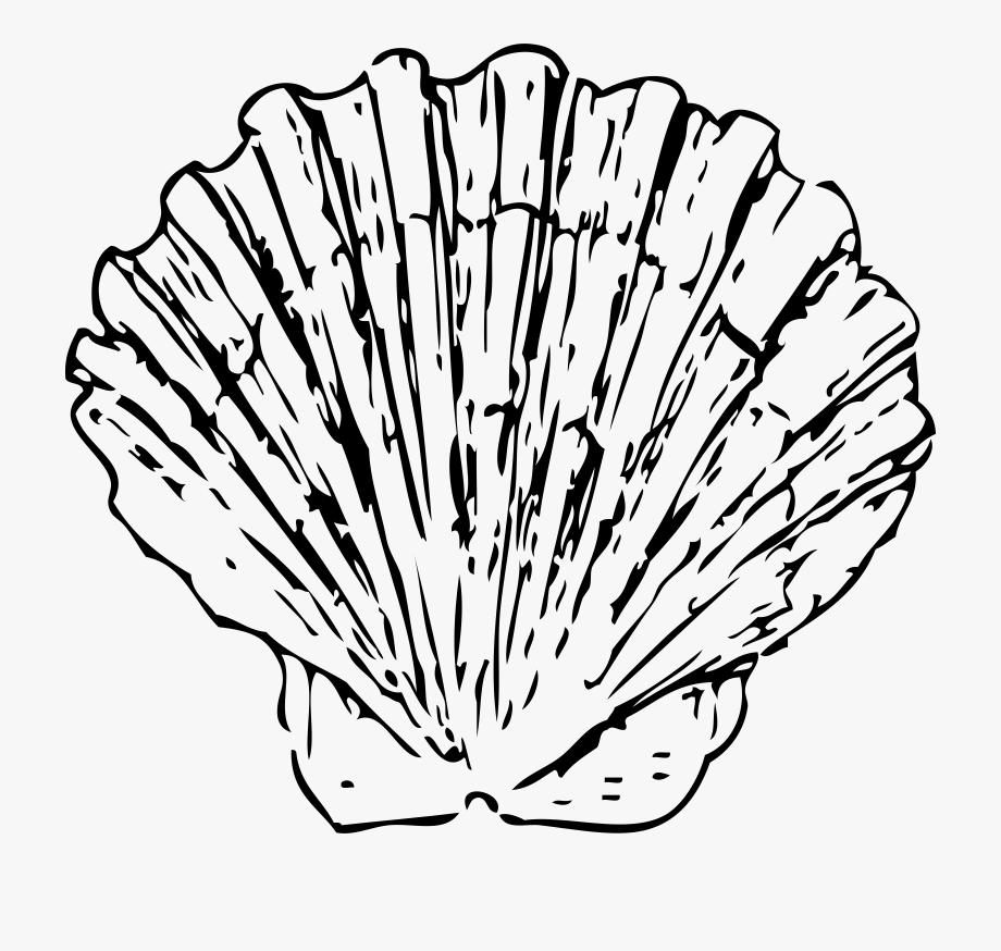 Seashell Clipart.
