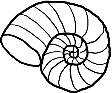 Seashell clipart black and white 3 » Clipart Station.