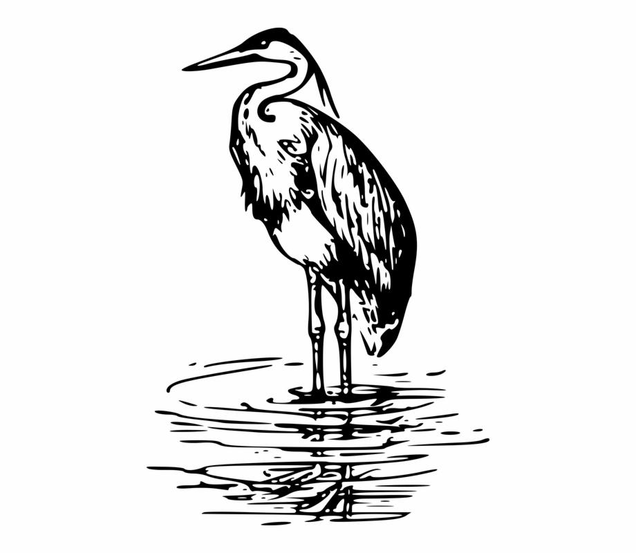 Animal Bird Heron Sea Seaside Black And White.