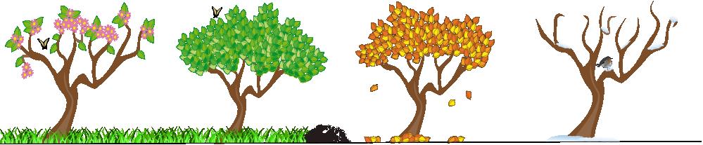 Four Seasons Tree Clipart.