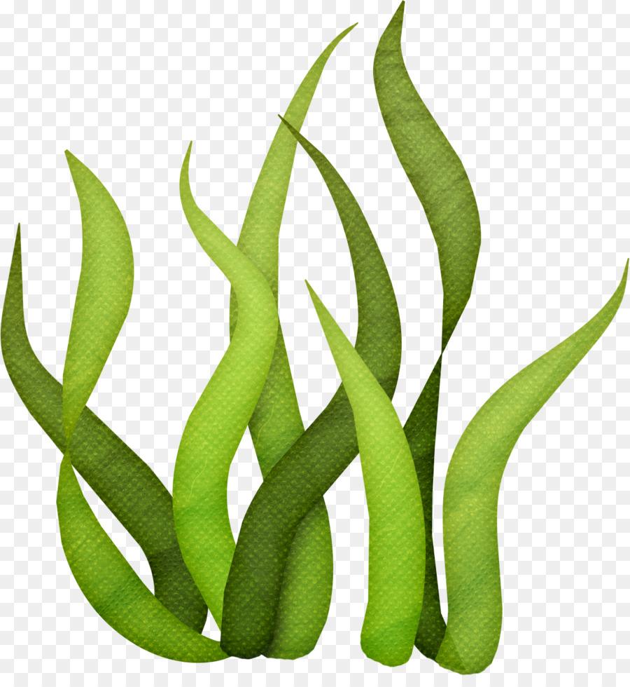 Seaweed Drawing Clip Art.