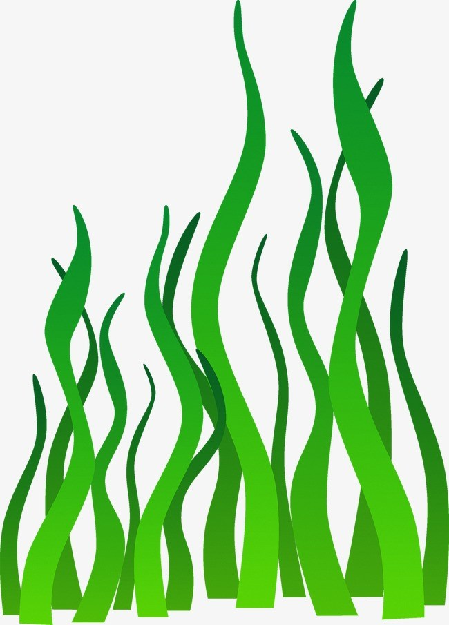 Seaweed clipart png » Clipart Portal.