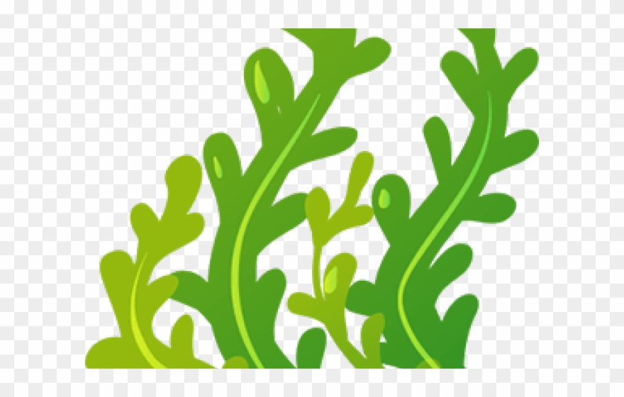 Seaweed Clipart Animated.