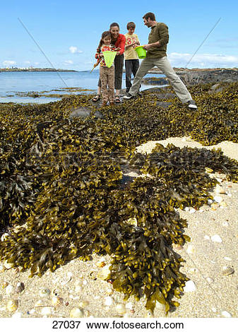 Picture of Family with net and bucket looking at seaweed on beach.