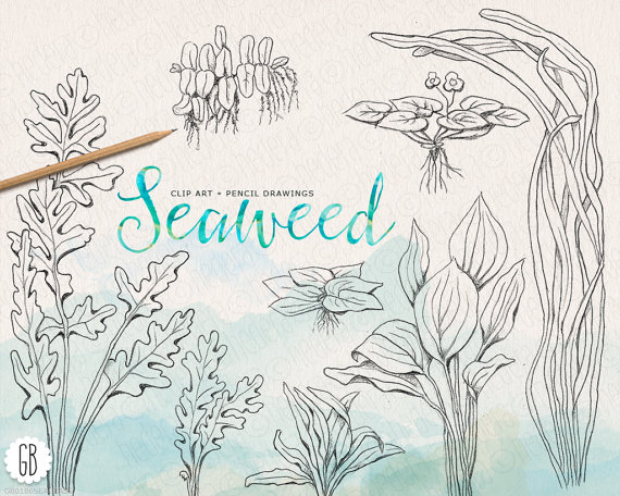 Seaweeds, seagrass, hand drawn, pencil, vintage inspired, sea.