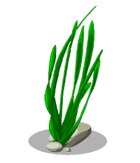 Seaweed Illustration transparent PNG.