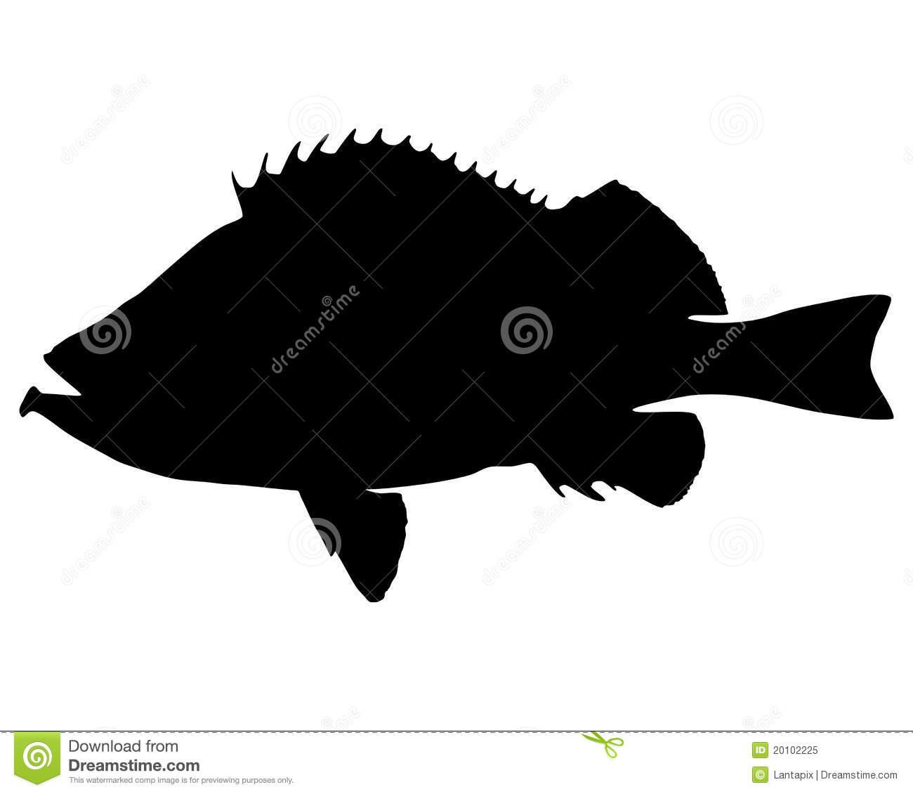 Sebastes marinus clipart #12