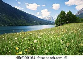 Blume wiese alpenpanorama Stock Fotos und Bilder 4.418 blume wiese.