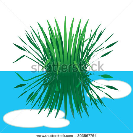 Gallery For > Sedges Clipart.
