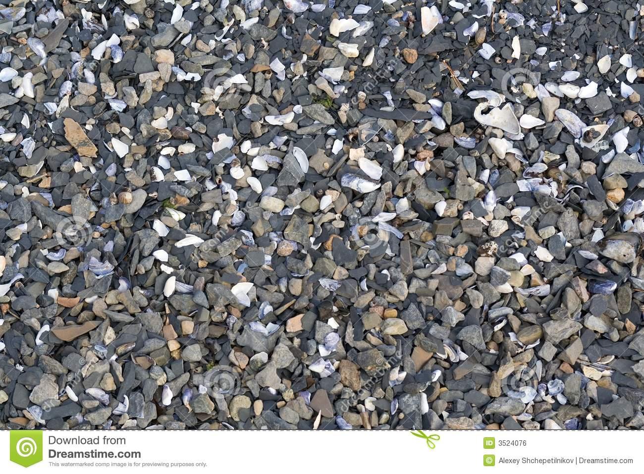Sediment Stone Shells Beach Royalty Free Stock Image.