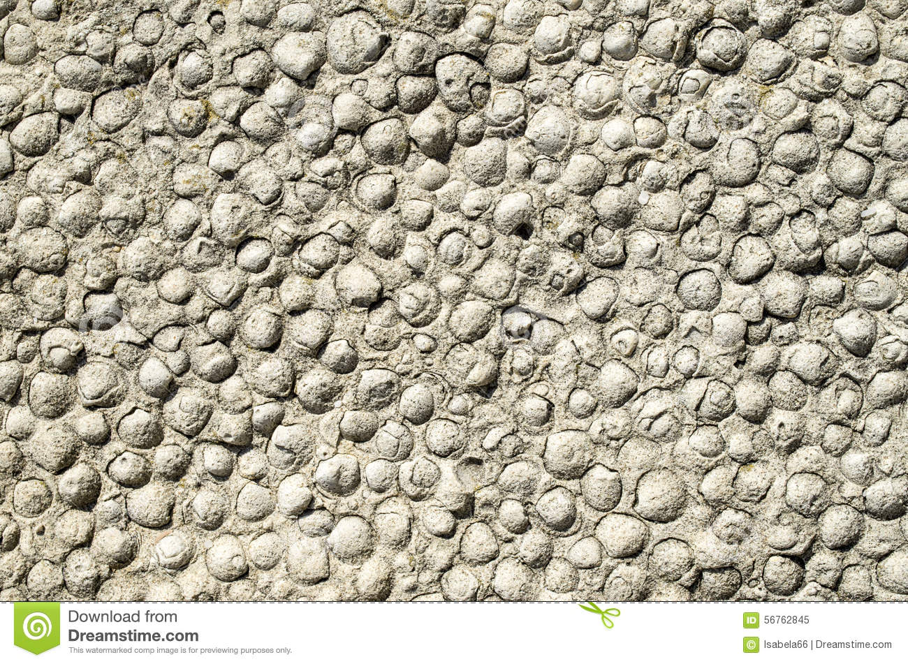 Sediment Rock With Fossilized Seashells On The Beach Stock Photo.