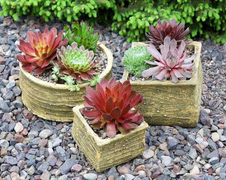 1000+ ideas about Succulents Online on Pinterest.