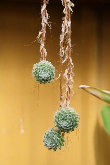 1000+ images about succulent plants on Pinterest.