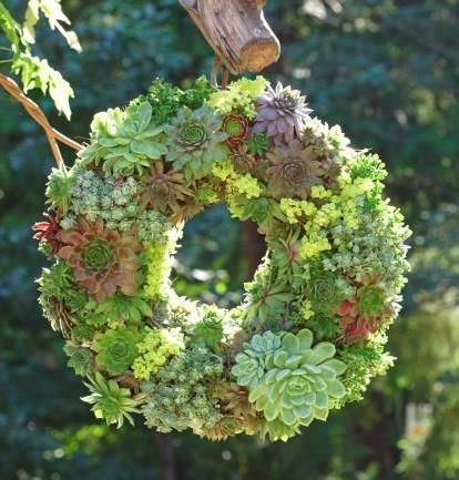 1000+ images about SUCCULENTS, SEDUMS AND SUCH on Pinterest.