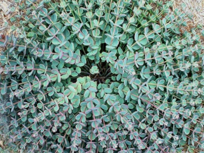 1000+ images about More Pinterest sedums & succulents on Pinterest.