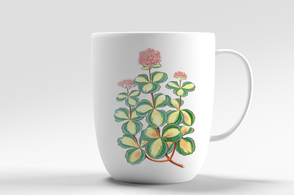 Vintage Leaves: 955 Sedum Sieboldii by Enliven Designs.