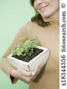 Sedum Stock Photo Images. 1,403 sedum royalty free images and.