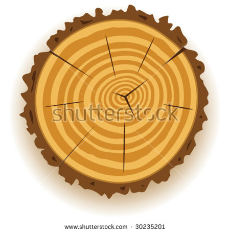 Vector Macro Of Dried Wooden Trunk Cut Clip.