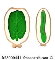 Seed coat Stock Illustrations. 8 seed coat clip art images and.