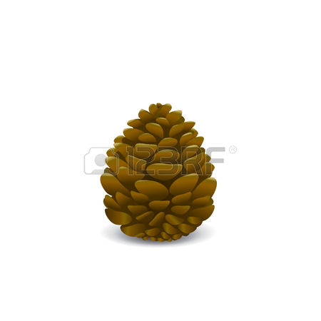 842 Seed Cones Stock Vector Illustration And Royalty Free Seed.