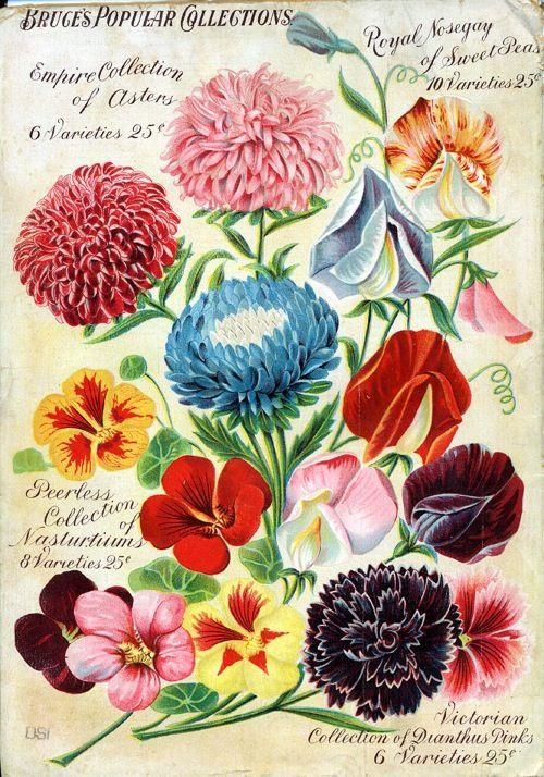 1000+ images about Vintage flora & fauna on Pinterest.