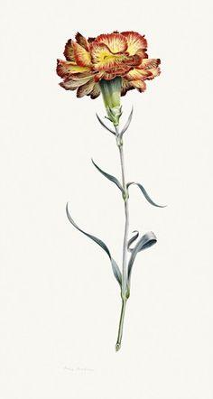 A wonderful collection of Beatrix Potter's botanical art pieces.